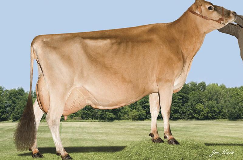 Eclipse Cow Image