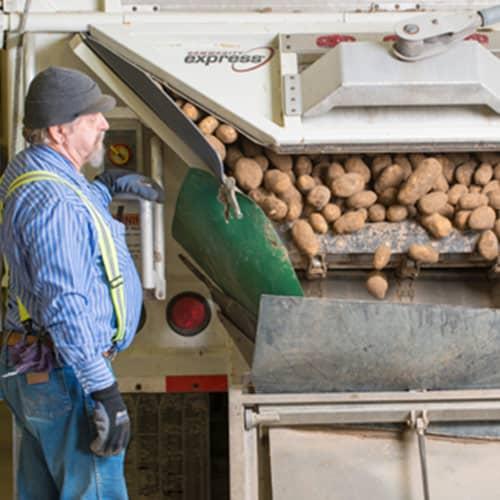 Picture of transportation professional monitoring unloading of potato trailer.